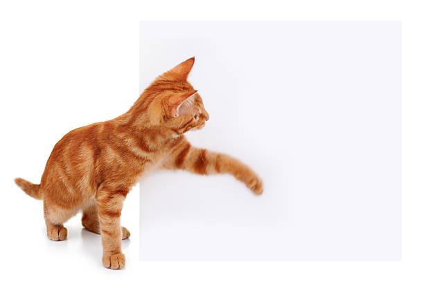 Pet Cat Sign stock photo