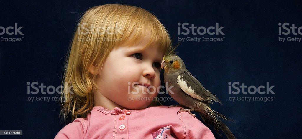 Pet Cockatiel on Her Shoulders stock photo