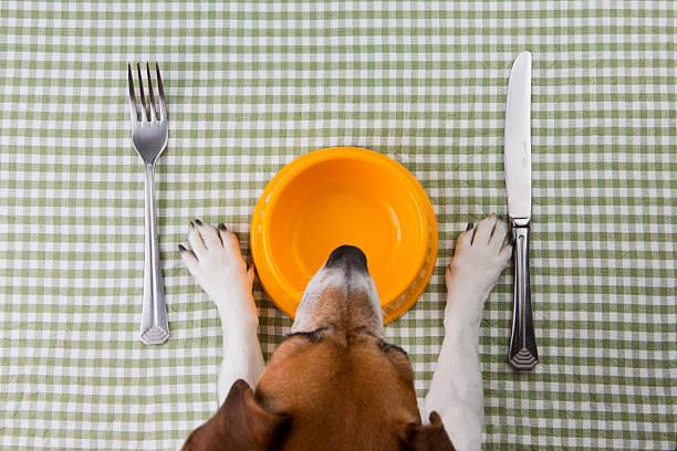 haustier-ernährung - hundenapf stock-fotos und bilder