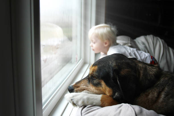 Pet Dog and Little Baby Looking Dreamily out Window on a Rainy Day stock photo