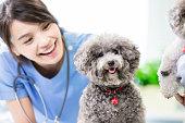 ペットの犬と獣医