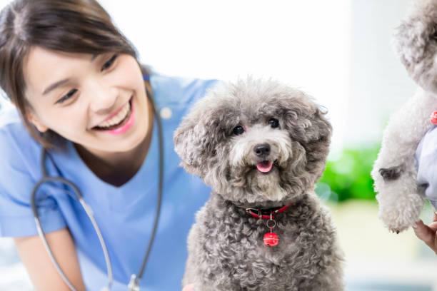 Pet dog and the vet picture id1174828595?b=1&k=6&m=1174828595&s=612x612&w=0&h=asjwpmrvj3nek5vjjd6usgdll5rqzb8syvp 5mysnmy=
