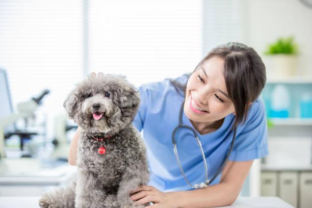 Pet dog and the vet picture id1176349146?b=1&k=6&m=1176349146&s=612x612&w=0&h=qixru5g3wm  uixs8002urdc3p4gomyq1z2de4zgea0=