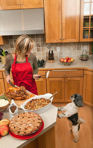 Pet Dog Begging for Thanksgiving Turkey from Woman in Kitchen A woman preparing Thanksgiving dinner with turkey, stuffing, mashed potatoes, gravy, and apple pie in home kitchen. An appreciating  hungry pet dog begs for food, up on its hind legs anticipating its share. The holiday meal is a traditional feast in the USA and is a staple of American culture. thanksgiving pets stock pictures, royalty-free photos & images