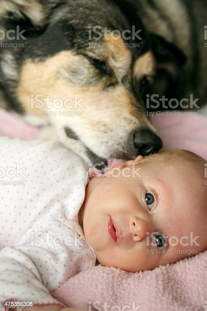 Pet dog kissing newborn baby girl picture id475356308?b=1&k=6&m=475356308&s=612x612&h=n321au owsbngtgxmt5etqwfqzn6 mz rdakxdhsety=