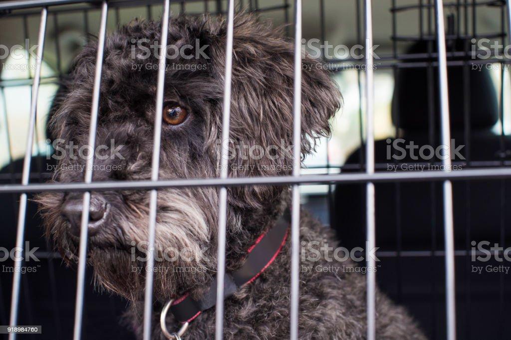 Haustier Hund sitzen im Auto Kiste bereit für die Reise – Foto