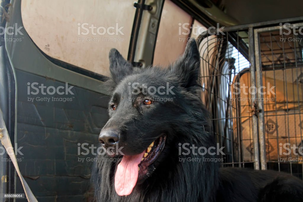 Pet dogs in the compartment, closeup of photo stock photo
