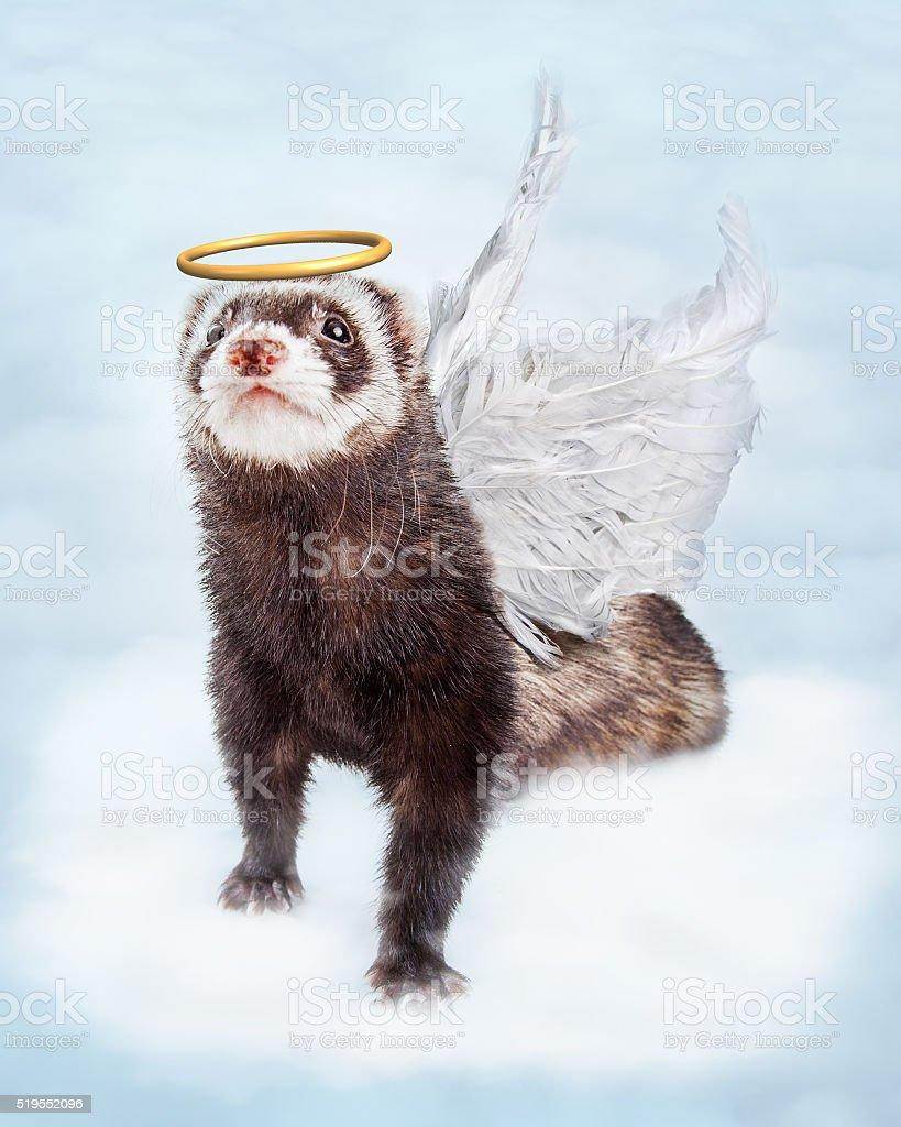 Pet Ferret Angel in Clouds stock photo