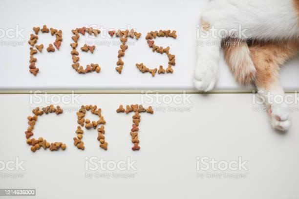 Pet food picture id1214636000?b=1&k=6&m=1214636000&s=612x612&h=kxgbub zzqmugdbye pydnx7svjuscjpnkz4jag3a3i=
