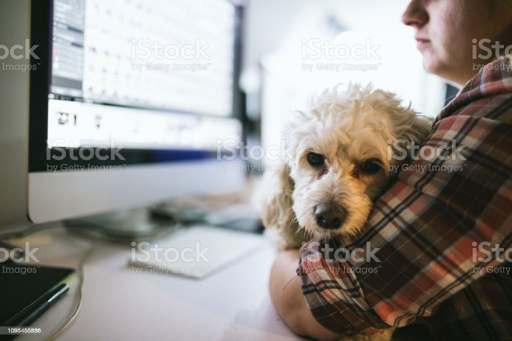 Cute white sleepy dog enjoying in the office while woman working,...