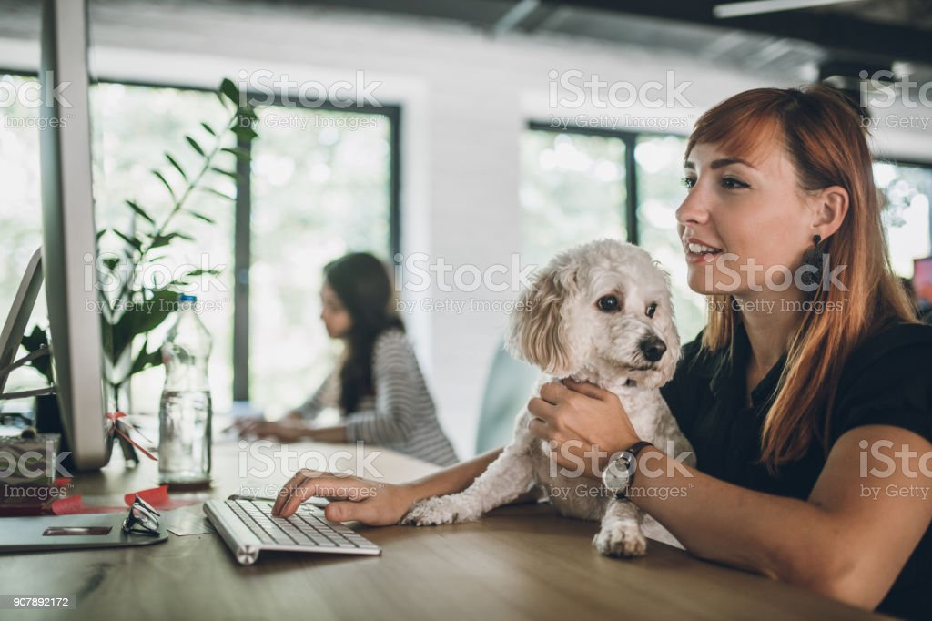 Group of creative coworkers working in pet friendly office, with...