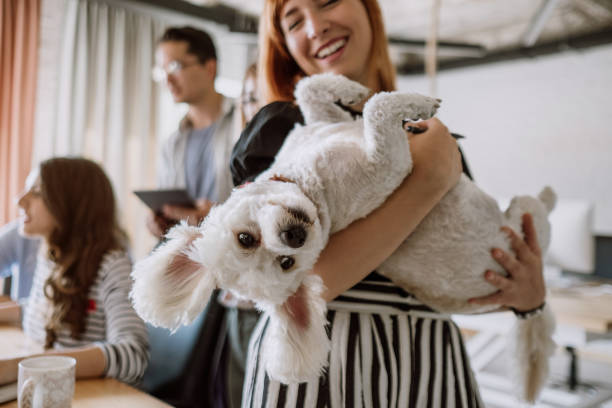 pet friendly workspace - happy pets stock photos and pictures