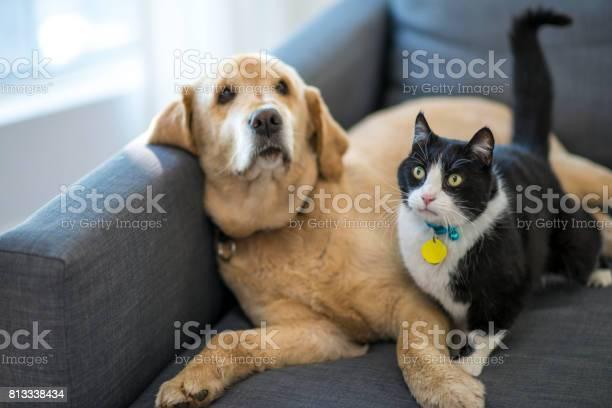 Pet friends picture id813338434?b=1&k=6&m=813338434&s=612x612&h=jd3  bi1in viszd39xiasy0kyyqm3u1avues7viyvw=