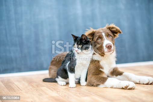 A cute cat and dog are sitting together on a floor. They are inside of a house.