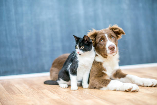 Pet Friends stock photo