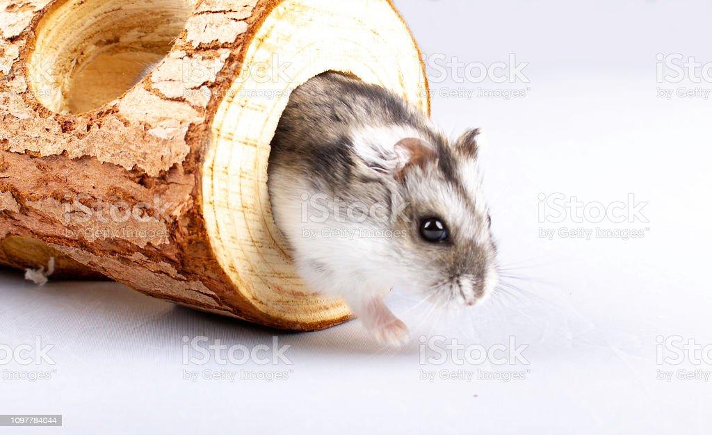 Hamster Rör