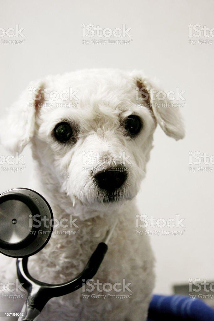 Pet Health royalty-free stock photo