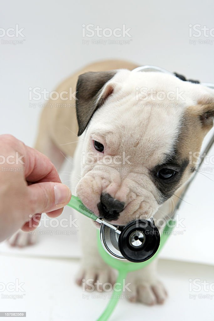 Pet Health Vertical royalty-free stock photo