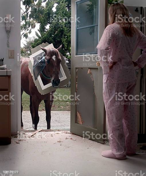 Pet horse trying to come through doggy door picture id108175177?b=1&k=6&m=108175177&s=612x612&h=nobafwjs97yybohjyft guwxv72ybdptgpnv7mg5sio=