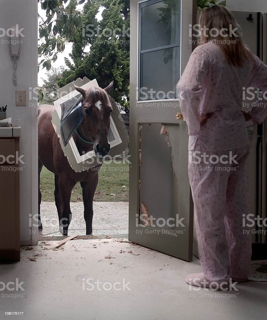Pet Horse Trying to Come Through Doggy Door stock photo