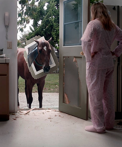 pet horse bemüht, durch die tür hundemotiven - lustige pferde stock-fotos und bilder
