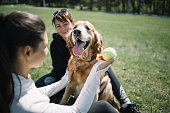Pet in park playing with girls and ball. Dog sitting in park and female hand holding tennis ball.