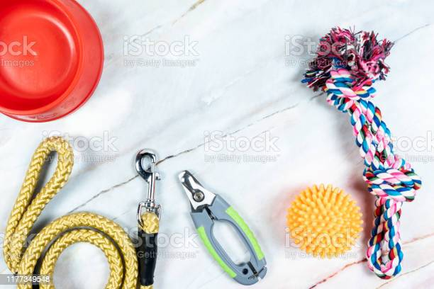 Pet leashes nail scissors with toys picture id1177349548?b=1&k=6&m=1177349548&s=612x612&h=rtagdxywmohygirvvam wunyaot4ezrxskbvvtbdfn8=