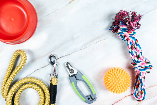Pet leashes nail scissors with toys picture id1177349548?b=1&k=6&m=1177349548&s=612x612&w=0&h=h05ppdvtxljfbl0i1eoz eblrjpmmk83xsqqwwgfqsy=