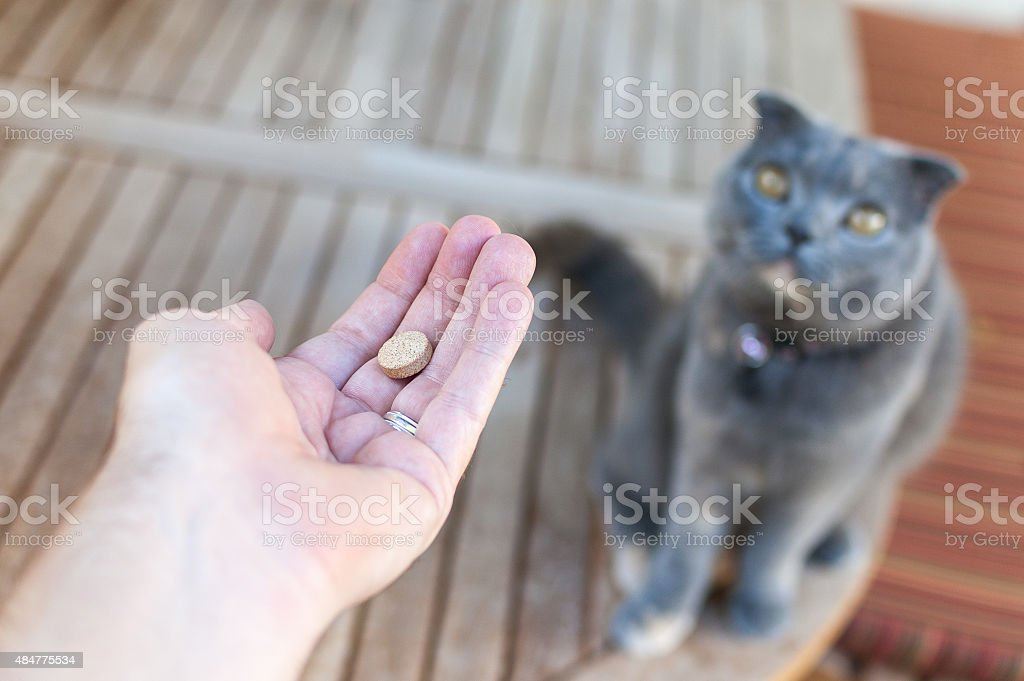 Pet owner giving his cat a pill/tablet stock photo