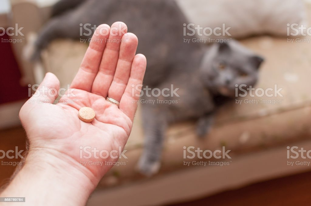 Pet owner giving his cat a pill/tablet - Royalty-free Animal Stock Photo