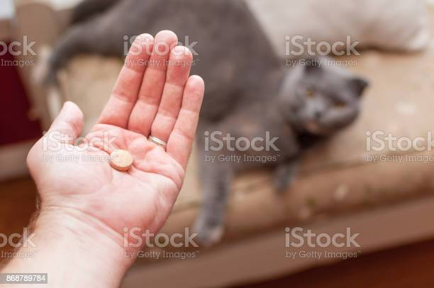 Pet Owner Giving His Cat A Pilltablet Stock Photo - Download Image Now