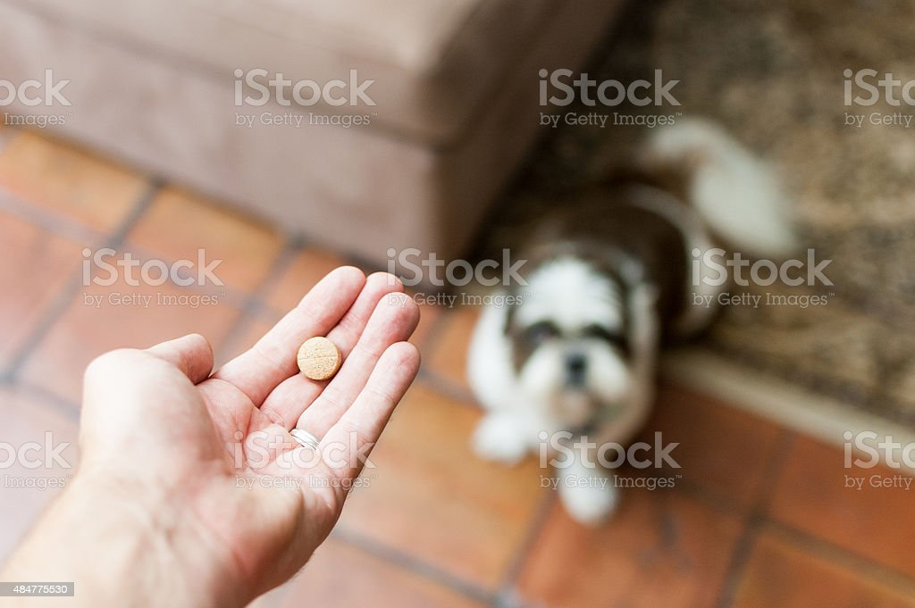 Pet owner giving his dog a pill/tablet - Royalty-free 2015 Stock Photo