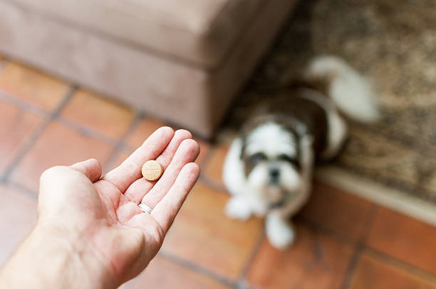 Pet owner giving his dog a pill/tablet stock photo