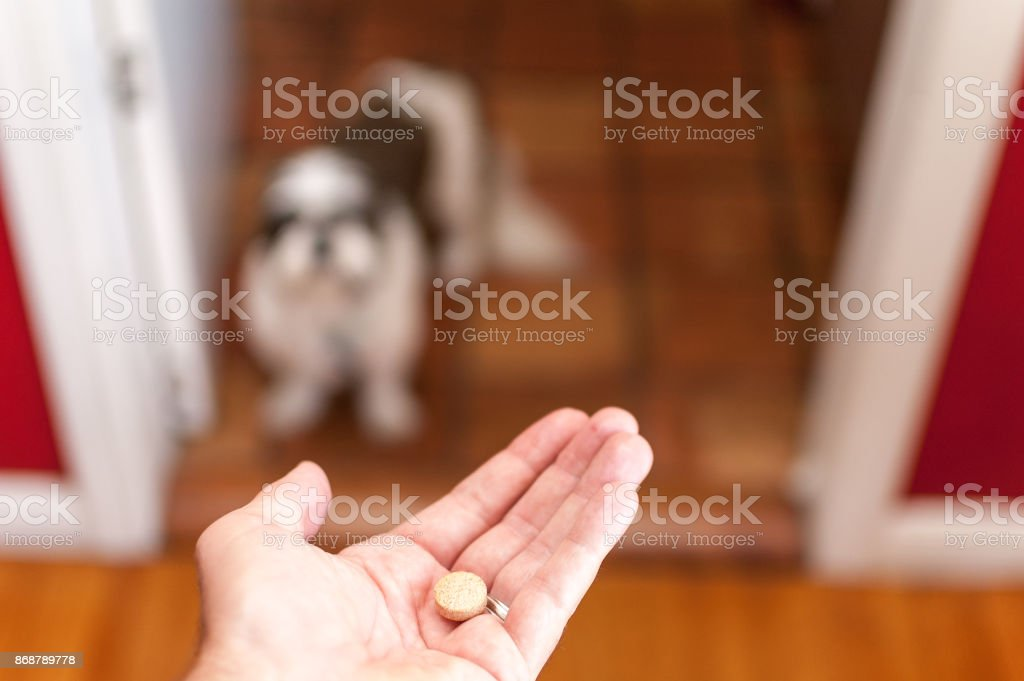 Pet owner giving his dog a pill/tablet - Royalty-free Animal Stock Photo