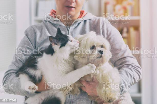 Pet owner with dog and cat picture id878447666?b=1&k=6&m=878447666&s=612x612&h=z1fmbie6ram1triayou8yyp0rvxte092o4zuqnourda=