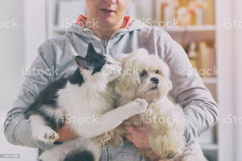 Pet owner with dog and cat stock photo