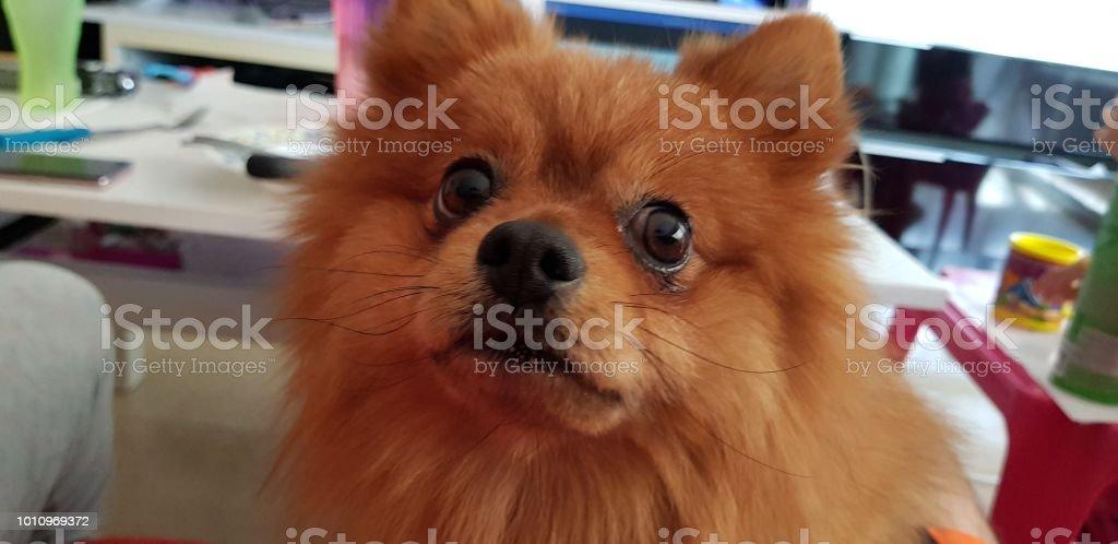 Mascota - foto de stock