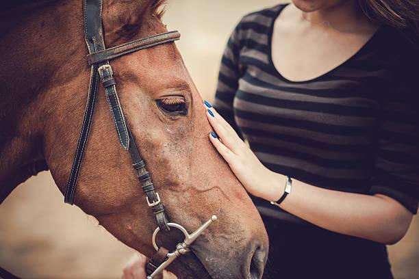 animali domestici - terapia alternativa foto e immagini stock
