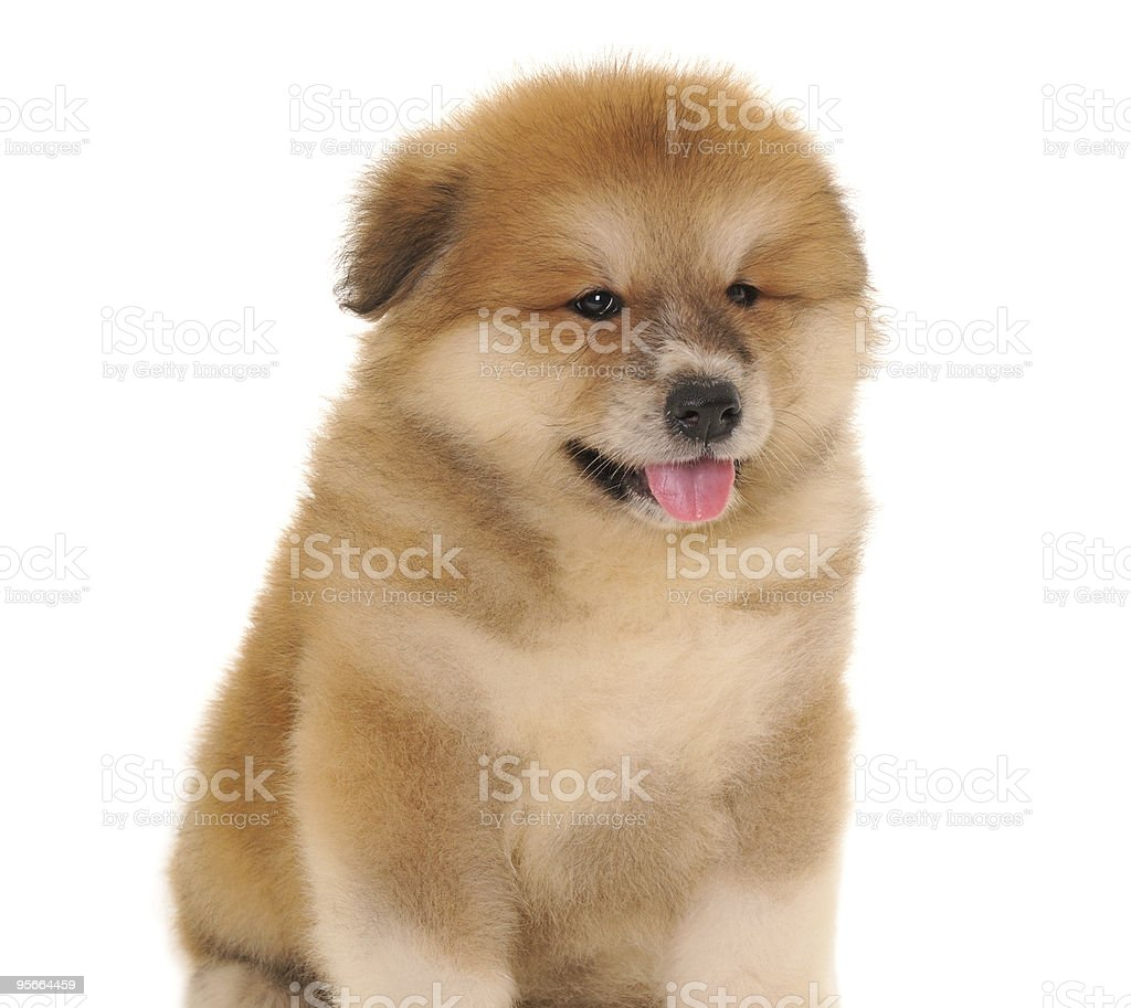 Pet royalty-free stock photo