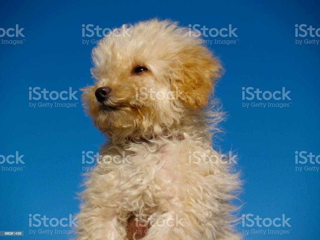 Pet royalty-free stock photo