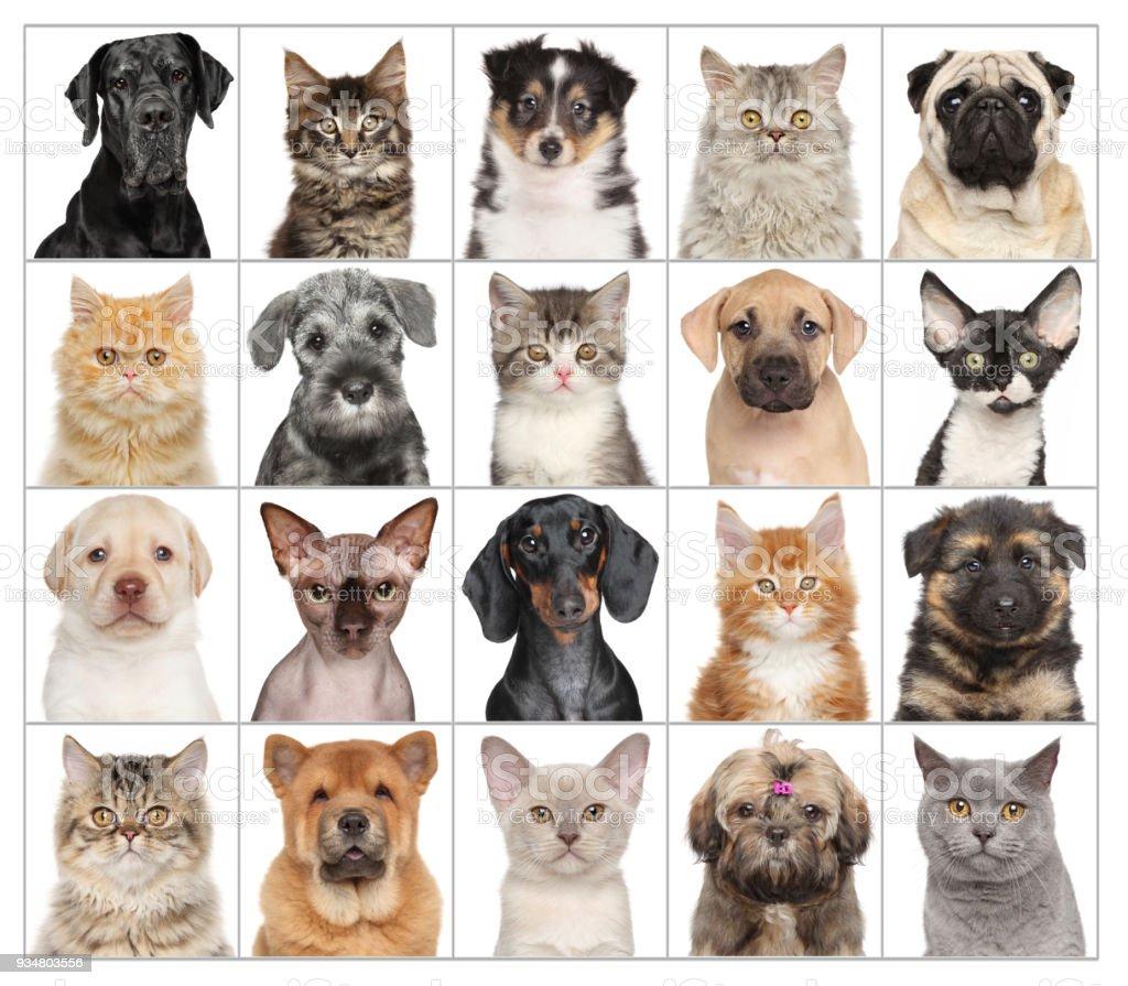애완 동물 초상화 흰색 절연 - 로열티 프리 가축 스톡 사진