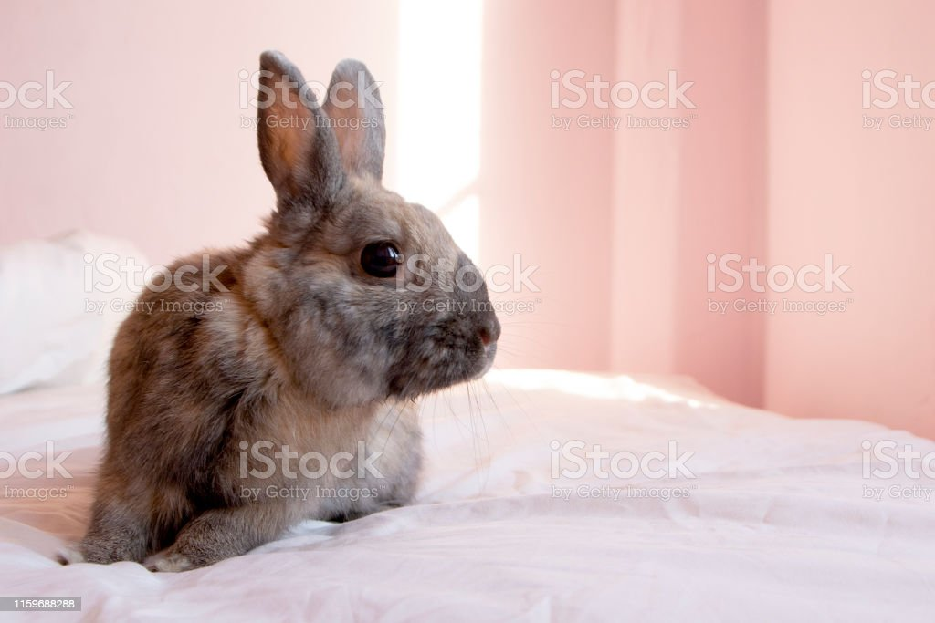 A speckled brown rabbit rests on a bed in a pink bedroom.
