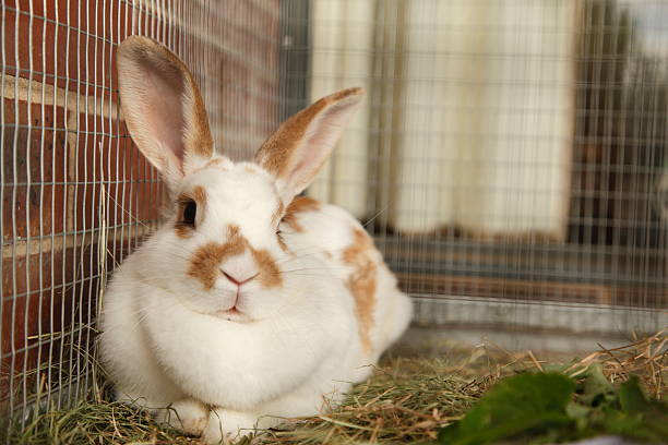Pet rabbit picture id184938707?b=1&k=6&m=184938707&s=612x612&w=0&h=hh p6yjgvhorc0eie3r1mvzb7msm gzu53jtsfaqjku=