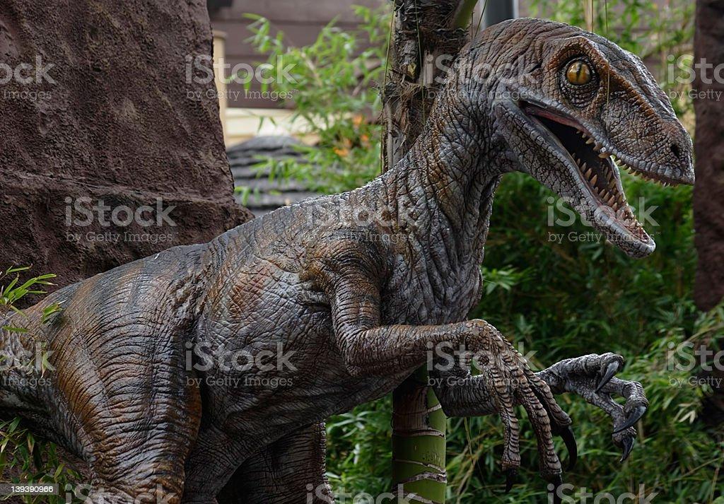 Pet Raptor stock photo