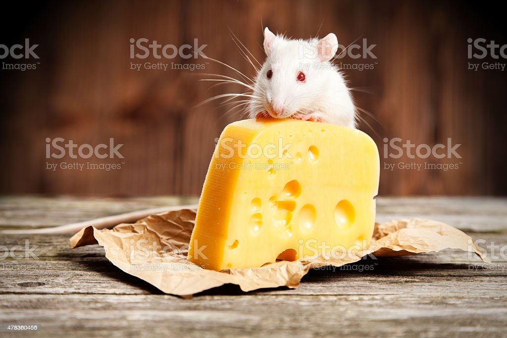 Image result for rat with cheese