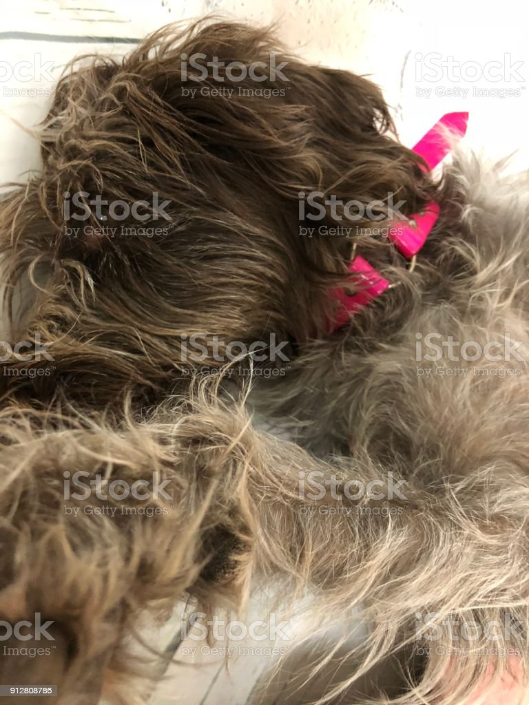 Pet selfie stock photo