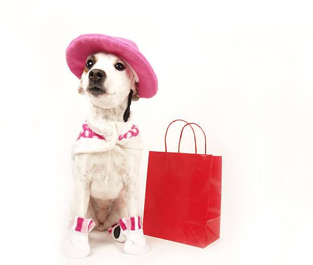 pet shop - prinzessinnenschuhe stock-fotos und bilder
