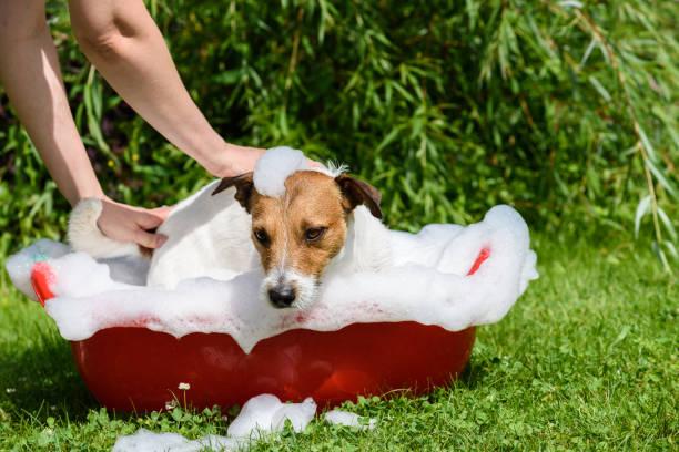 pet spa care: dog takes a bath at hot summer day - bacinella metallica foto e immagini stock