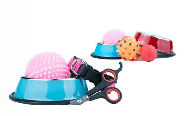 Pet supplies concept pet nail scissors collars stainless bowls and picture id1078086976?b=1&k=6&m=1078086976&s=612x612&w=0&h=pbkqkl3kvcrwdjfn3jxypzjmrif0kunrvj b2x6eidy=