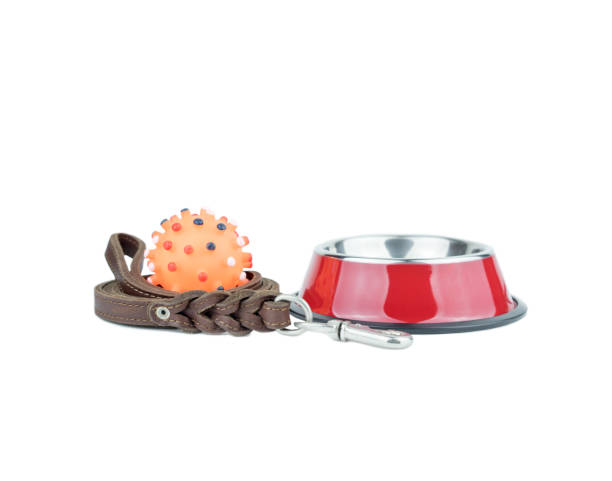 Pet supplies set about stainless bowl rubber toys and leather of for picture id1076689448?b=1&k=6&m=1076689448&s=612x612&w=0&h=gel o4geggwqiqw7patuf7 fn9awmglkmct52rv1vym=